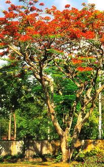 phuongvi